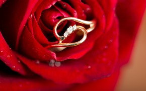 Picture flower, rose, Bud, ring, flowers, roses, buds