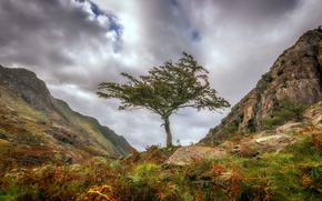 Picture clouds, mountains, tree, Wales, Snowdonia