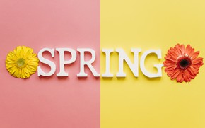Picture flowers, spring, colorful, chrysanthemum, flowers, spring, bright