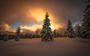 Wallpaper winter, forest, snow, sunset
