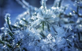 Picture winter, frost, branches, bokeh, by dashakern