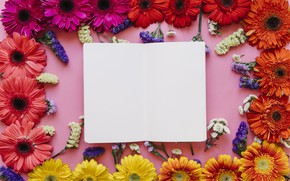Picture flowers, frame, colorful, chrysanthemum, flowers, spring, bright
