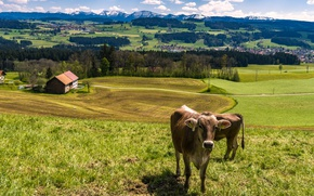 Picture the sky, grass, the sun, clouds, trees, landscape, mountains, field, Germany, cows, houses, forest, meadows, …