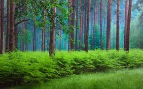 Wallpaper forest, spring, fern, haze, nature