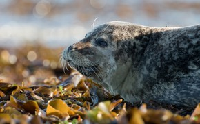 Picture look, face, leaves, smile, background, seal, portrait, lies, cub, the expression, wildlife, bokeh, spotted, pinnipeds