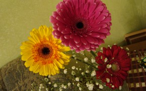 Picture gerbera, a bit of color in autumn day, in a vase
