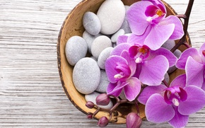 Wallpaper stones, Orchid, pink, flowers, orchid