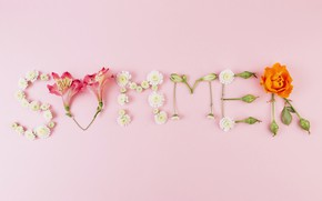 Picture summer, flowers, background, pink, summer, pink, flowers, composition