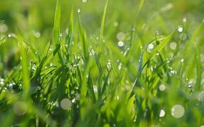 Wallpaper green, drops, grass