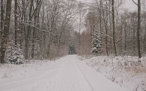 Picture Winter, Road, Trees, Snow, Forest, Frost, Nature, Winter, Frost, Snow, Road, Forest, Trees