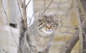 Picture cat, spring, murrrr