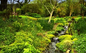 Picture greens, grass, trees, Park, stream, England, the bushes, Rosemoor Gardens