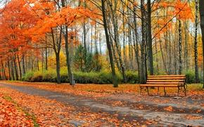 Wallpaper leaves, autumn, Park, trees, bench