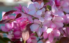 Picture macro, spring, flowering