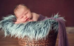 Picture child, sleep, boy, sleeping, fur, basket, baby, sweet, baby, kid, newborn