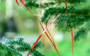 Picture holiday, tree, new year, ribbon