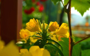 Picture Spring, Spring, Yellow flowers, Yellow flowers