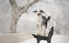 Picture winter, each, dog, bench