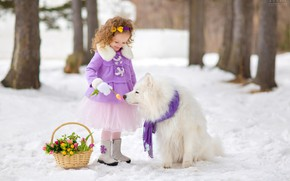Picture snow, basket, dog, girl, tulips, Samoyed