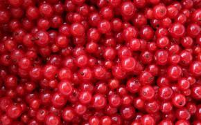 Picture berries, texture, red currant, Kislenko