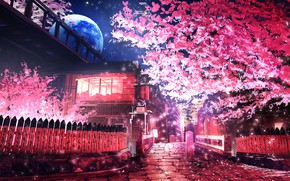 Picture trees, night, the moon, street, spring, smile
