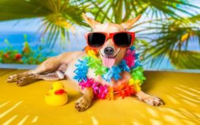 Wallpaper dog, glasses, duck, humor, language