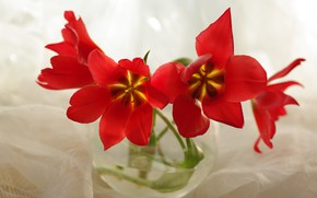 Picture flowers, beauty, plants, still life, a bunch, flora, bouquets, red