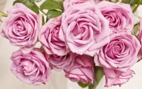 Wallpaper buds, Bush, roses, pink, pink, roses, flowers, flowers