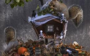 Picture autumn, leaves, hut, pumpkin, Halloween, bird, proteins, skeletons