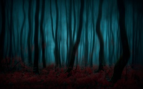 Picture forest, trees, nature, silhouette