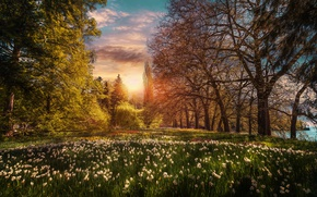Picture trees, sunset, flowers, Park, Germany, garden, irises, Germany, Lake Constance, Baden-Württemberg, Baden-Württemberg, Lake Constance, Mainau, …