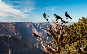 Picture mountains, birds, tree