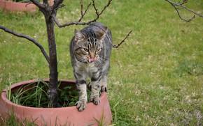 Picture cat, meadow, pot