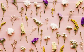 Picture flowers, background, colorful, wood, flowers, background, pattern