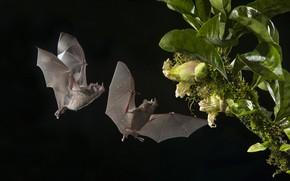 Wallpaper flower, Bat, night, Pair