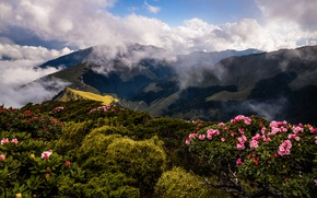 Picture greens, the sky, clouds, landscape, flowers, mountains, nature, fog, hills, vegetation, tops, spring, slope, couples, …