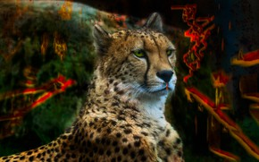 Picture look, face, color, cats, abstraction, background, paint, portrait, treatment, spot, Cheetah, bright, wild cats