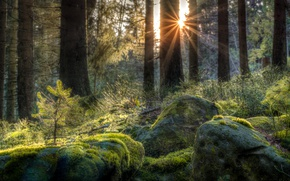 Picture forest, stones, moss, Germany, the rays of the sun, Baden-Württemberg, The black forest