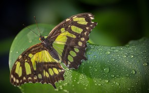 Picture Macro, Leaf, Drops, Butterfly