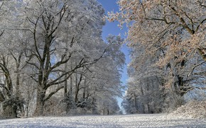 Picture winter, frost, road, trees, Switzerland