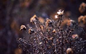 Picture nature, plant, Macro, autumn tree