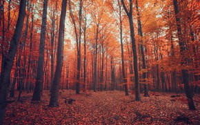 Picture autumn, forest, nature