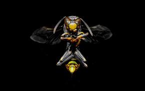 Picture China, China, OSA, wasp, royal wasp, Royal wasp