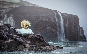 Picture ice, bear, sea, ocean, landscape, nature, water, rocks, waterfall, animal, cliff, Polar bear, glaciers