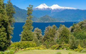 Picture greens, forest, grass, the sun, trees, flowers, mountains, nature, river, shore, glacier, Chile, Conguillio National ...