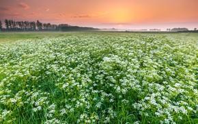 Picture field, summer, sunset, fog