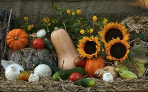 Picture bow, still life, vegetables, composition, zucchini, the sun, photonaturalist, the gifts of nature