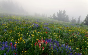 Picture grass, trees, flowers, fog, slope, meadow