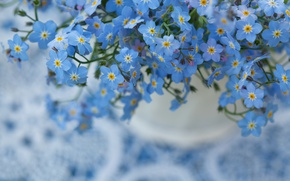 Picture macro, flowers, nature, background