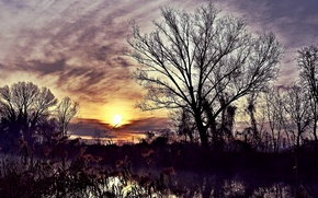 Picture night, river, reed